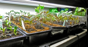 grow your own plants indoors