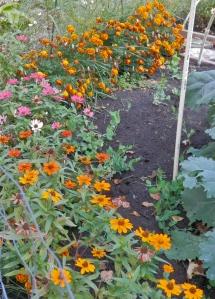 The garden's marigold border